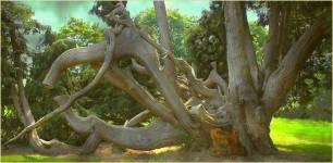 arbre-remarquable-a-combourg-35-05deb32d-2500-4391-a89f-0bc0f70bbe7b