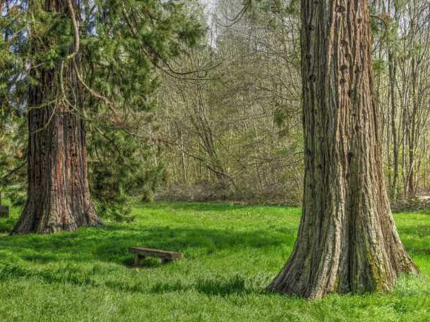 Les arbres remarquables