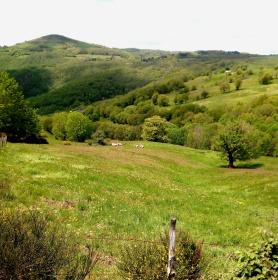 Vous comprenez pourquoi ce genre de paysage a tendance à vider votre palette de vert...